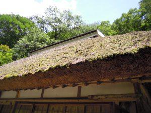 屋根の手入れが超大変だそう。