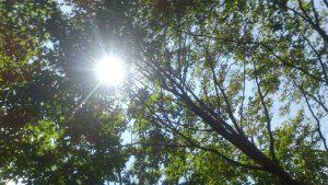 木陰は涼しい。 しかも良い風が吹いていた。